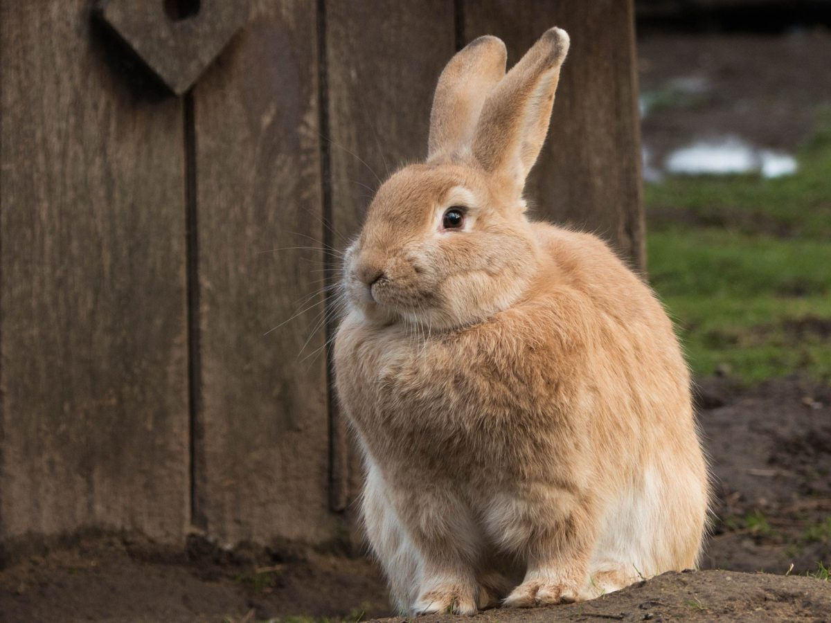 Why you need to hire the Hare now and not the tortoise?